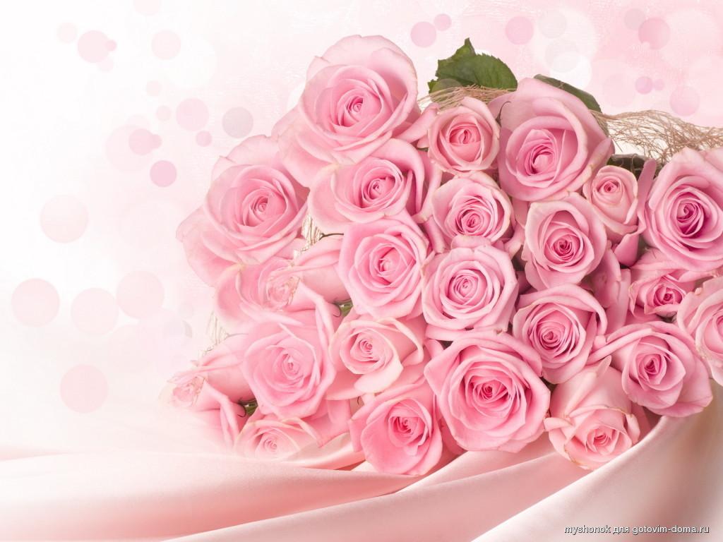 Плетистая роза мишка 5