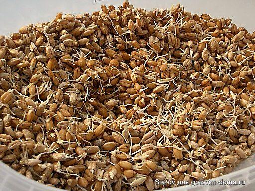 проростки пшеницы витамины