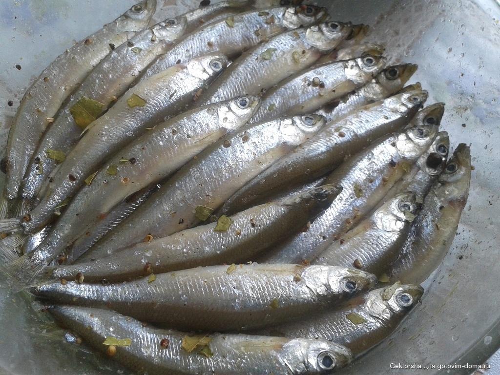 Рассол тщательно смывают, окунают рыбу в раствор уксуса или сахара для придания ей блеска, развешивают сушиться.