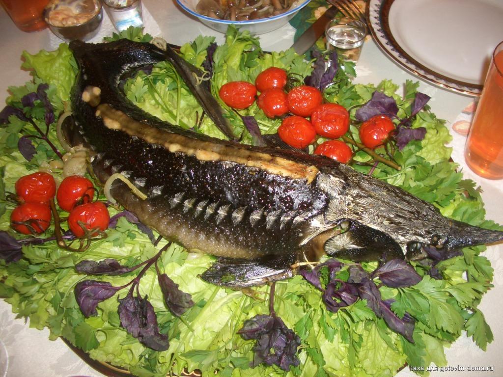 рецепты приготовления рыбы стерлядь